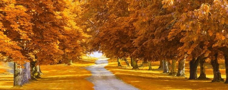 photodune-3984894-autumnal-alley-m.jpg